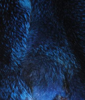 Енот синий