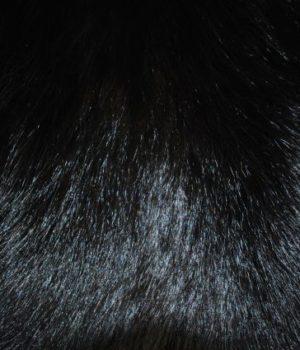 Енот черный