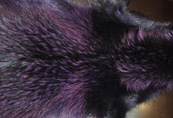 Енот фиолетовый