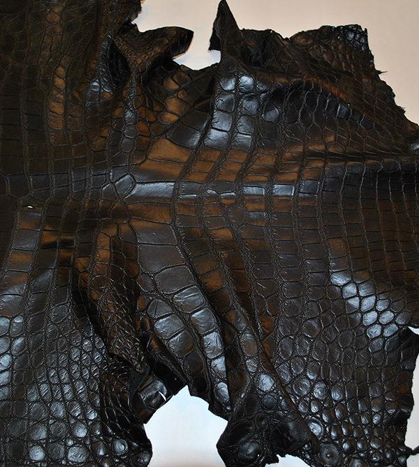 Крокодил черный
